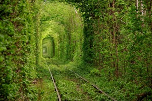 pociąg -www rozkowicz